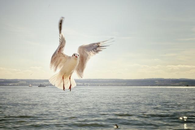 racek nad mořem