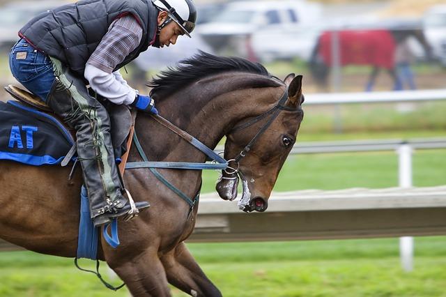 dostihový kůň